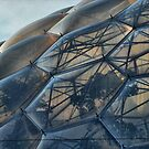 Biome 1 by Richard Horsfield