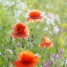 Poppy Days by Richard Horsfield