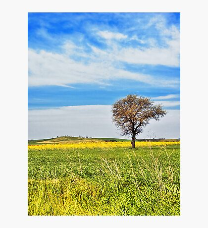 Yellow field with tree Photographic Print