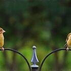 Greenfinch fledglings by missmoneypenny