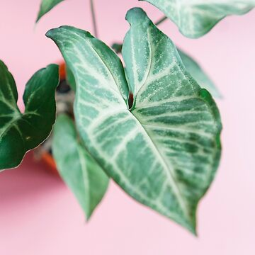 Beautiful plant in pink background by sleepwalker