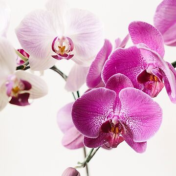 orchid  by sleepwalker
