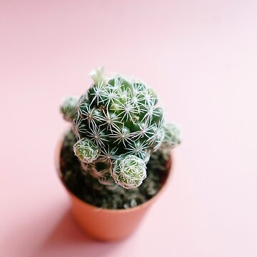 cactus by sleepwalker