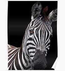 Burchells Zebra 2 Poster