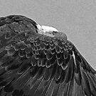 The Cloak of The Bald Eagle by Barbara Burkhardt