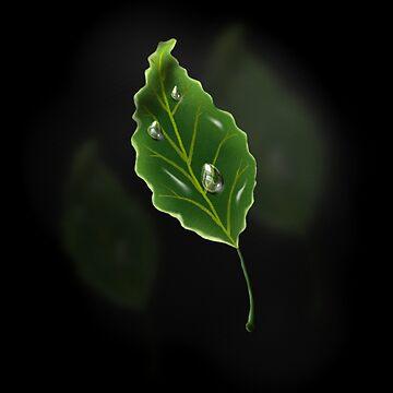 Leaf by thebigG2005