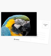 Hyacynth macaw Postcards