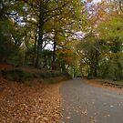 Autumn by Richard Horsfield