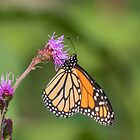 Monarch 2018-12 by Thomas Young