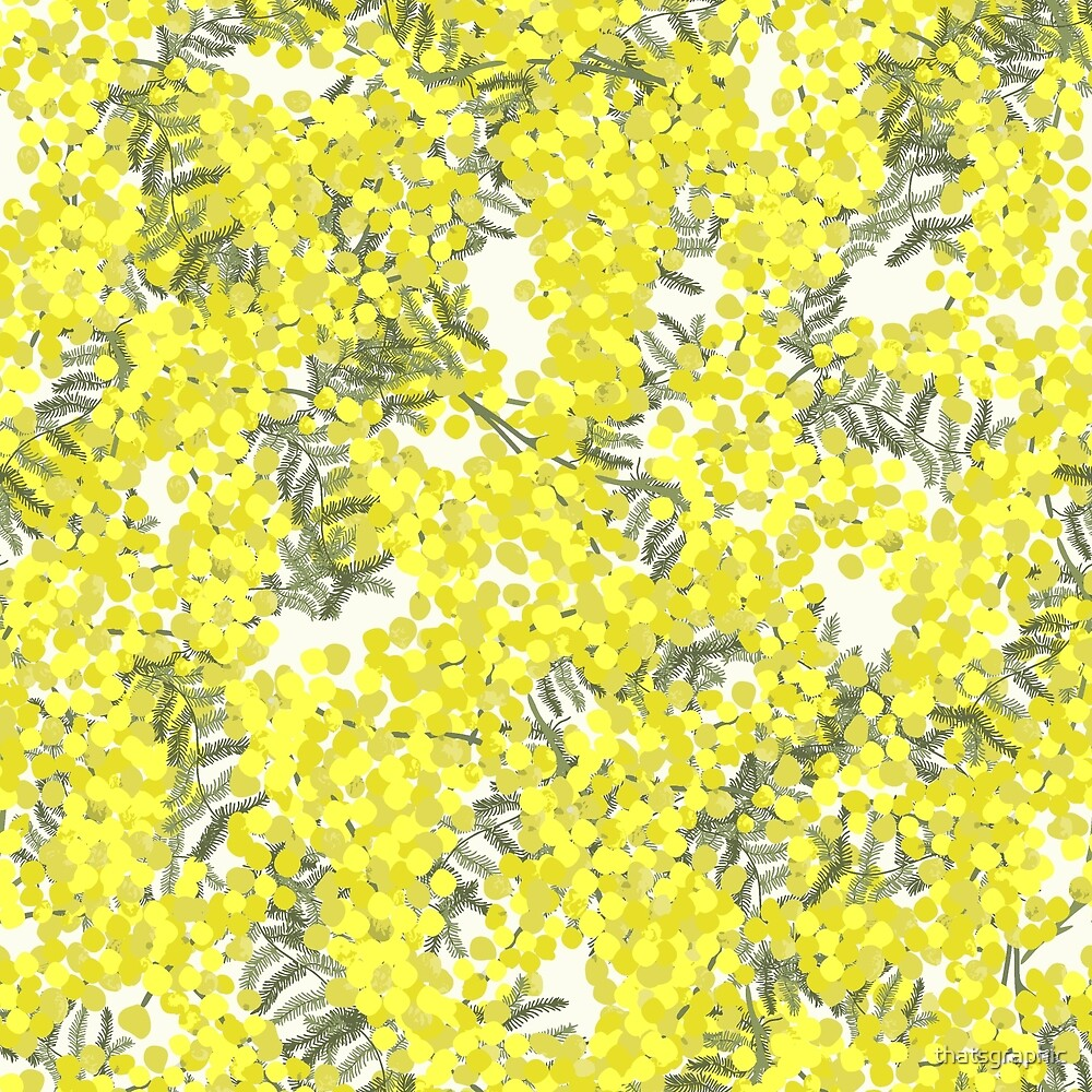 Flowering Wattle by thatsgraphic