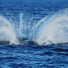 Thump! Humpback Whale, Hervey Bay, Queensland, Australia by Adrian Paul