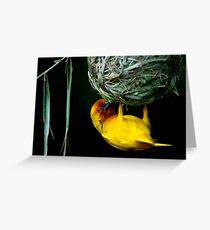 Weaver bird Greeting Card