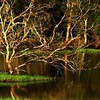 Woodgate Beach Wetlands by myraj