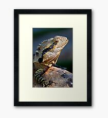 Spikes & Scales Framed Print