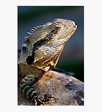 Spikes & Scales Photographic Print