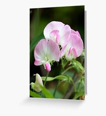 Pink-Tinted Pea Flowers Greeting Card