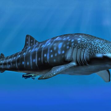 Whale Shark by Skyviper