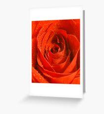 Single Red Rose Greeting Card