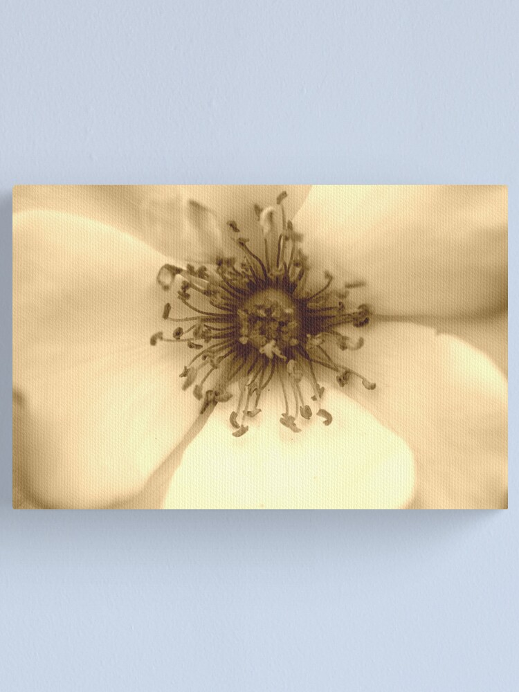 Alternate view of Heart of the White Rose in Sepia Canvas Print