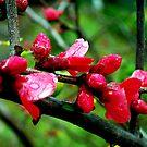 Blossum on a Bough by Lozzar Flowers & Art