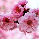 Happy Day Blossom.....May Joy Blossom from Within.   by Lozzar Flowers & Art