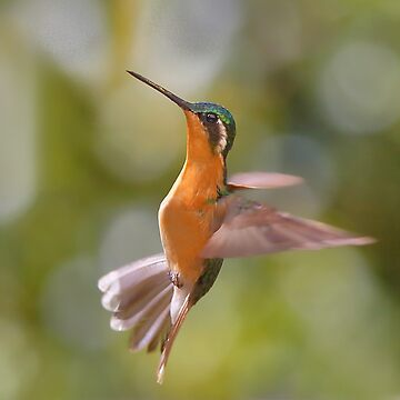 Hummingbird Acrobatics by Carole-Anne