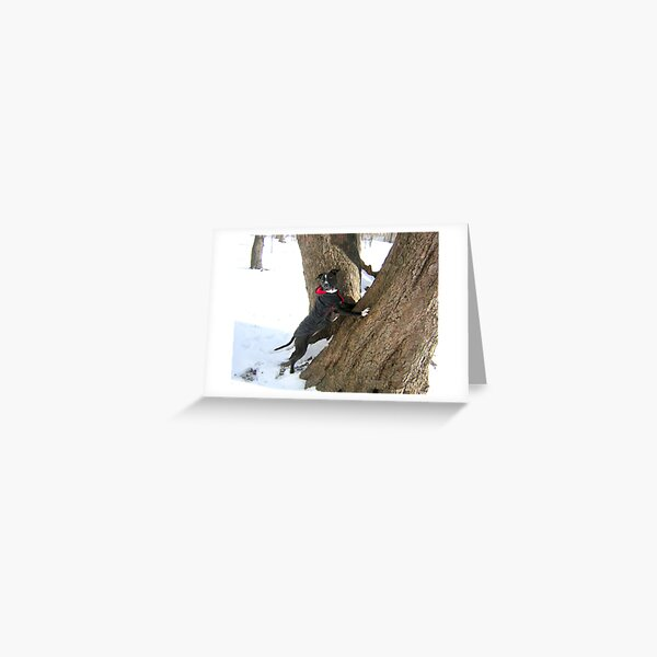 WHERE DID THE SQUIRREL GO? Greeting Card