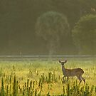 morning deer by cliffordc1