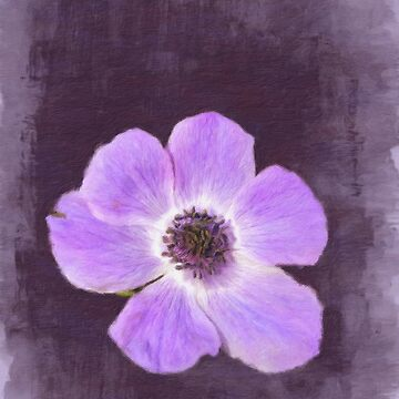 Big Purple Anenome... by Rasendyll