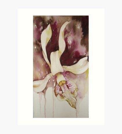dendrobium orchid © 2009 patricia vannucci  Art Print