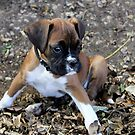 Play Time ~ Boxer Series by Evita