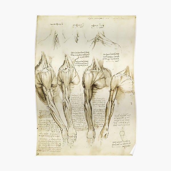 Da Vinci Medical Print - Medical Decor  Poster