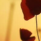 Poppy Love by TriciaDanby