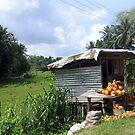 Roadside coconuts by John Nutley