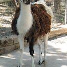 Momma Llama  by BLAMB