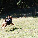 Byron says I need a cape! by Tucker The Dog