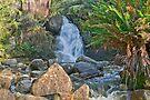 Lady Bath Falls by mspfoto