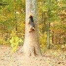 Squirrel, Squirrel!!!! by Tucker The Dog