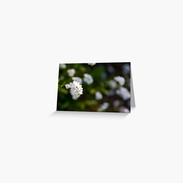 White forget-me-not Greeting Card