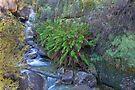 Mossy Rockery by mspfoto