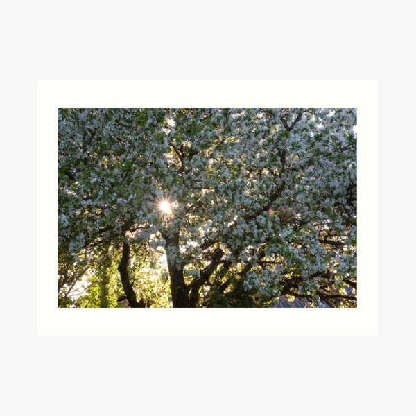 The beauty of an apple tree Art Print