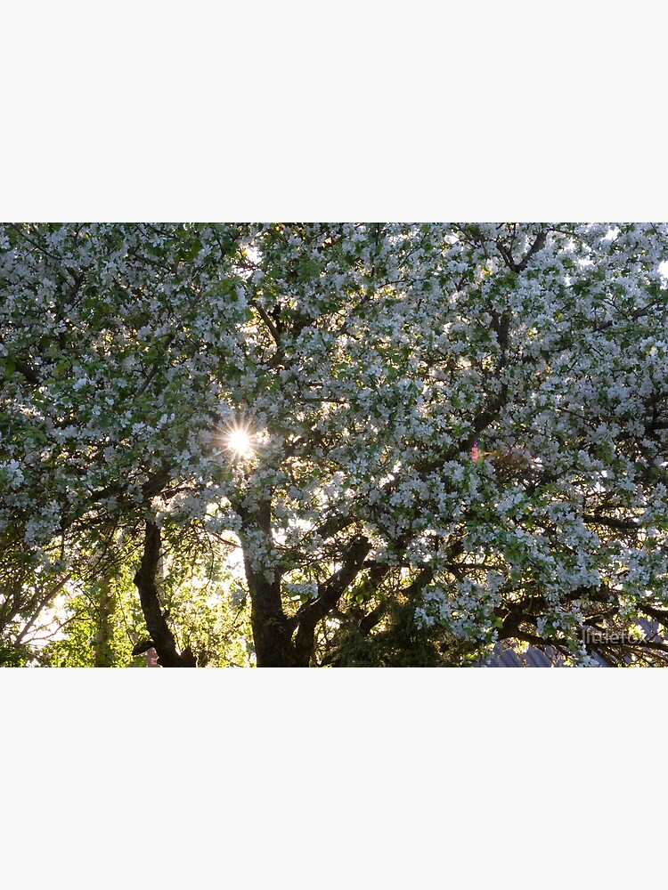The beauty of an apple tree by littlefox