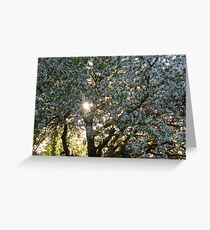 The beauty of an apple tree Greeting Card