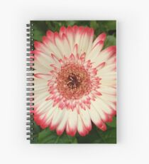 Red and white gerbera flower  Spiral Notebook