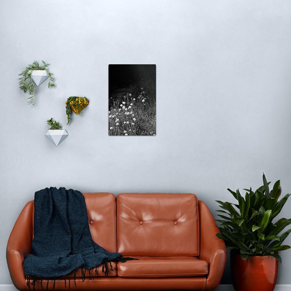 Dandelions in black&white Metal Print
