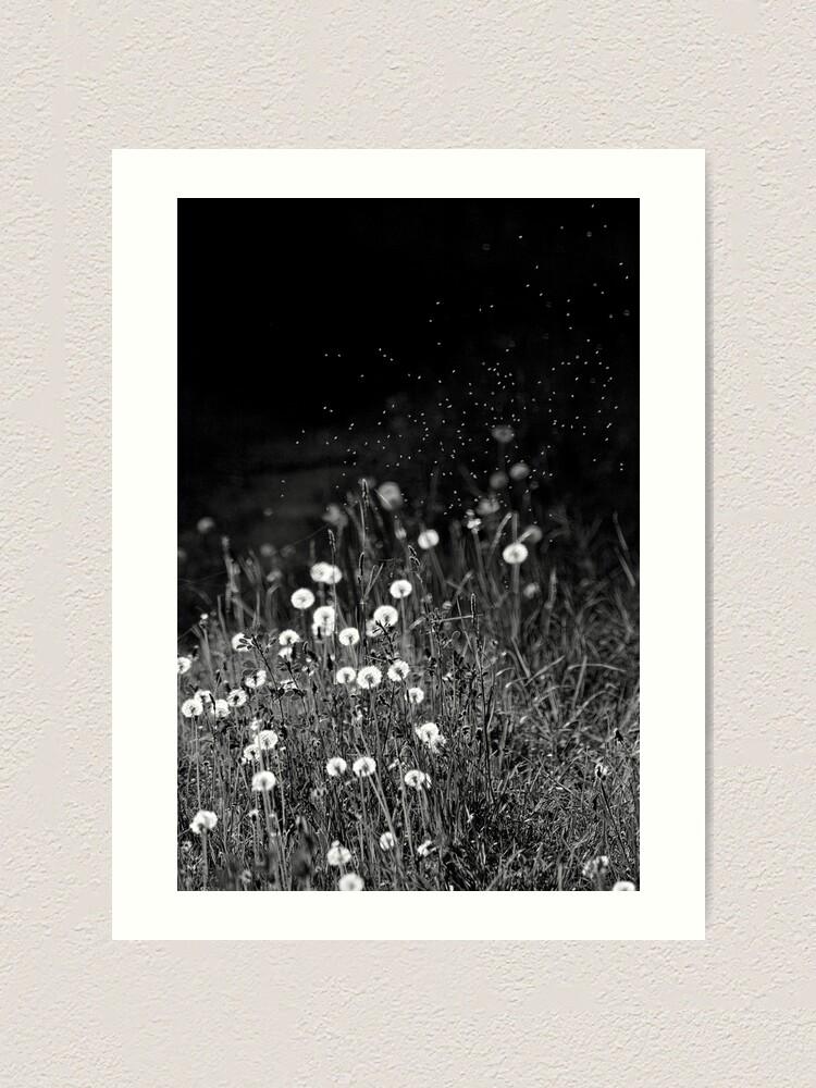 Alternate view of Dandelions in black&white Art Print