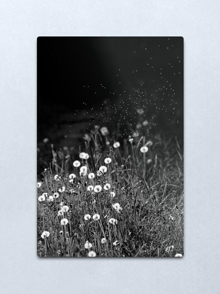 Alternate view of Dandelions in black&white Metal Print