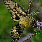 Swallowtail in Pink by Kbytes
