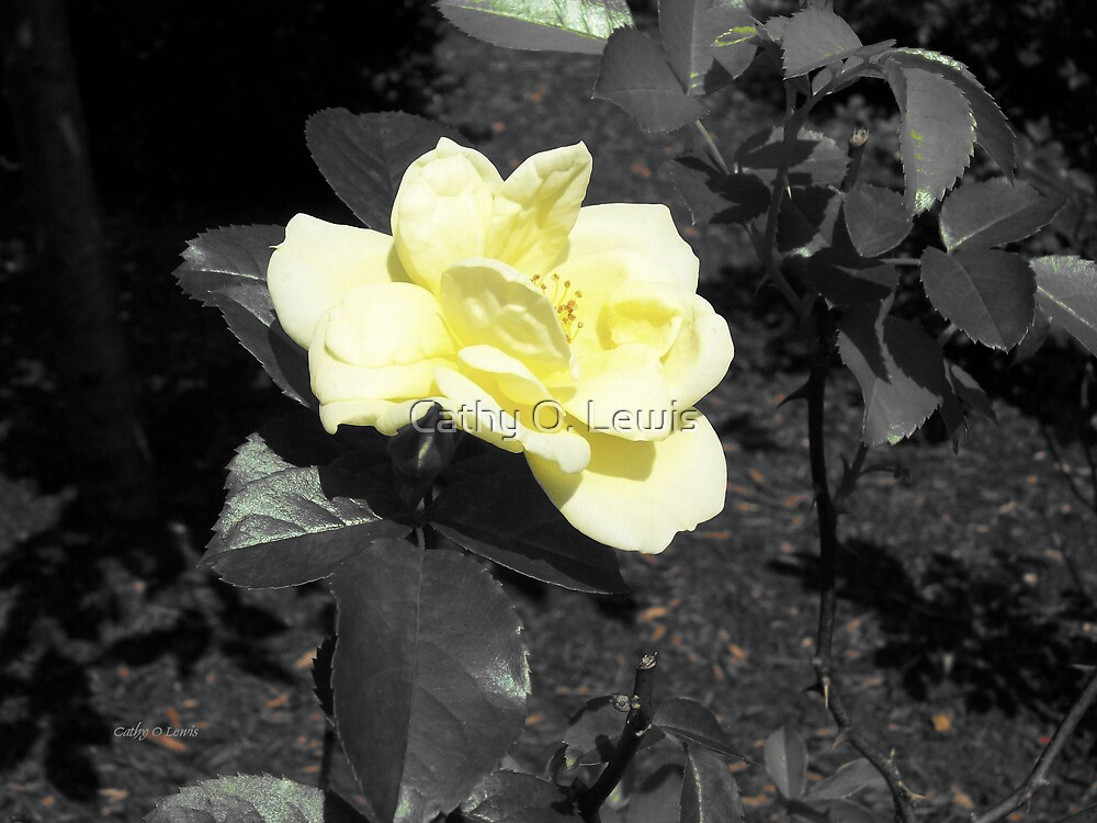 Cream Rose by Cathy O. Lewis
