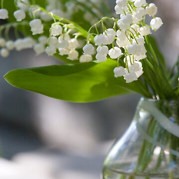 Lily of the valley by littlefox